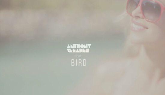 anthony-valadez-bird-good-lookin-screenshot