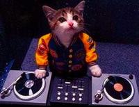 dj_kitty_turntables.jpg
